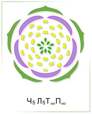 ботаника строение растения: